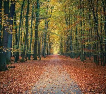 Fotomural Fall Landscape