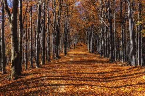 Fotomural Forest in Fall